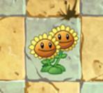 植物大战僵尸2双子向日葵图鉴